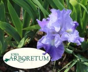 Iowa Arboretum iris